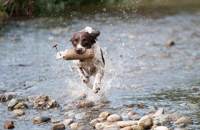 pes v řece