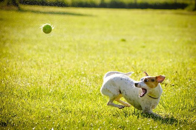 pes na lovu