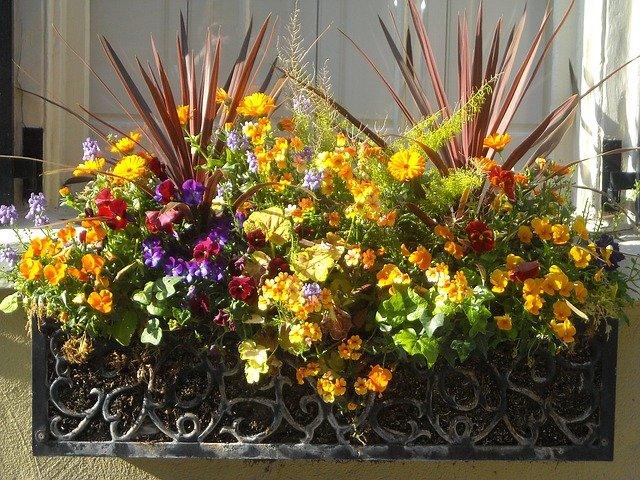 květiny v truhlíku