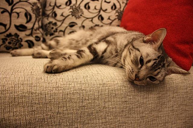 kočka, sedačka