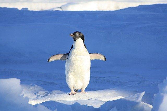 legrační tučňák