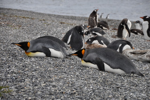 tučňáci na břehu