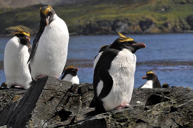 tučňáci v přírodě
