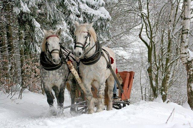 koně a sáně