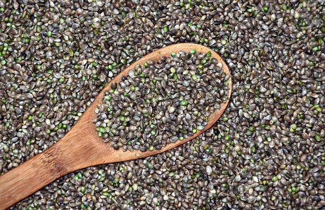 semínka konopí