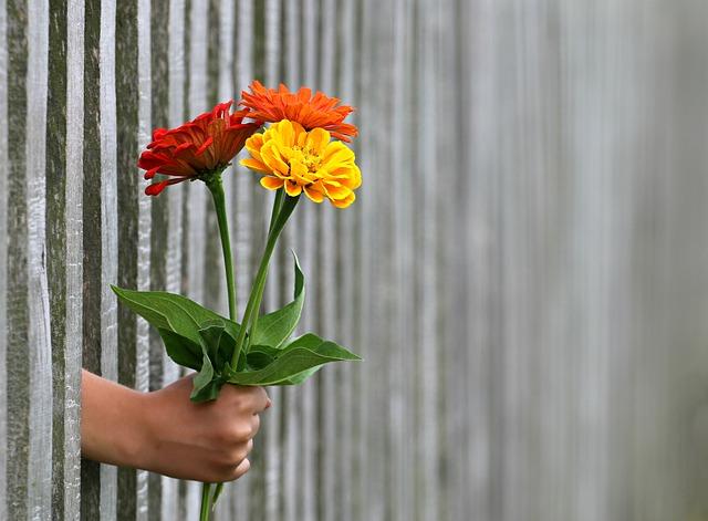 darování kytice